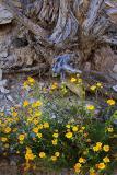 Desert Flora 7159