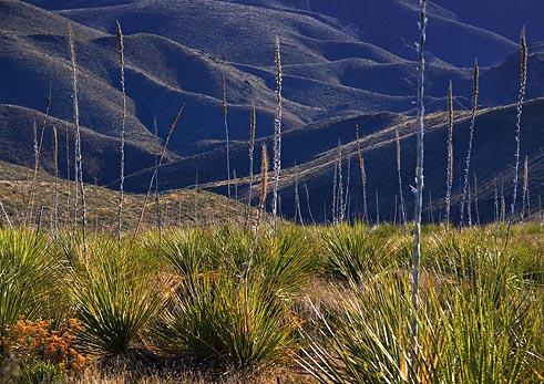 Desert Flora 7278