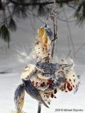 Winter Explosion