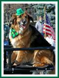 Dog of the Irish