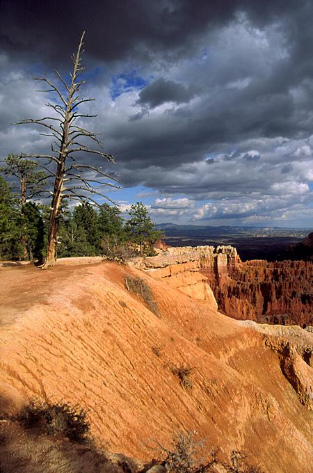 Storm at Bryce Canyon