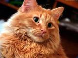 24-catstock-stock-cat-image.jpg