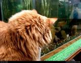 1591 stock cat photograph.jpg