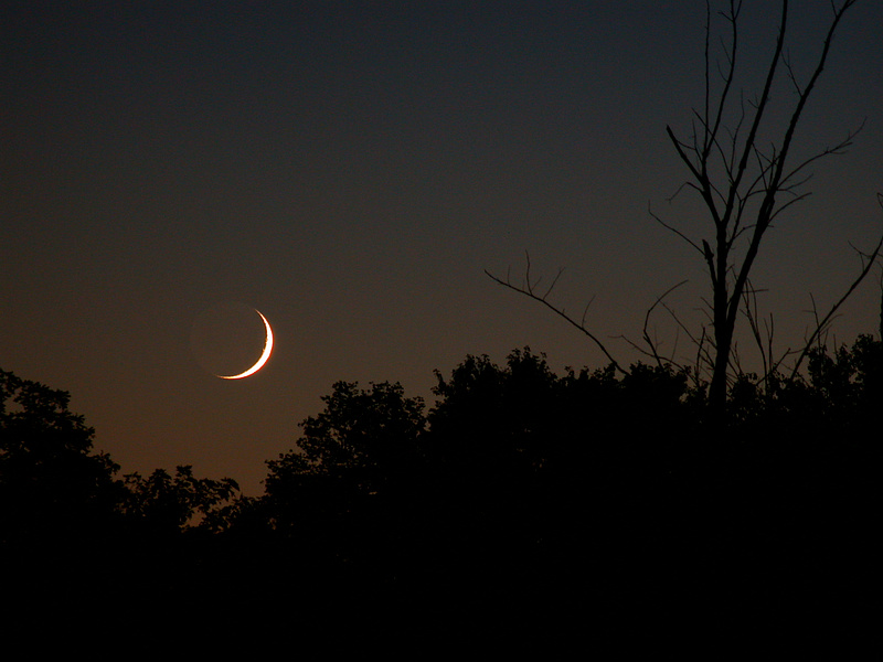 Crescent Moon Amongst the Trees