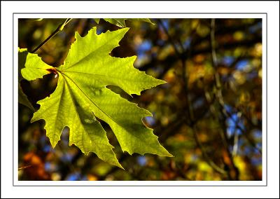 Stourhead ~ green leaf