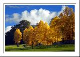 Longleat ~ autumn colours (2365)