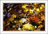 Stourhead ~ leaf us alone!