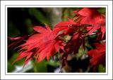 Stourhead ~ red leaves, Stourhead