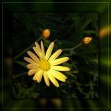 Daisy, daisy...