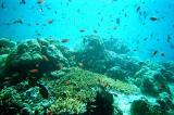 Zillions of fish