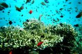 Little reef fish above the coral
