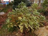 Plant.jpg(326)