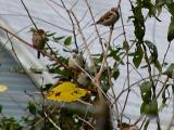 How many sparrows do you see.jpg(149)