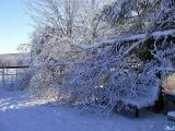 Fallen tree limb.jpg(374)