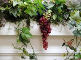 Grapes on a vine.jpg(426)