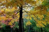 Montreal-Fall 2004