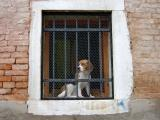 Venice - how much is that doggy in the window?