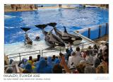 Killer whales show II