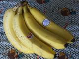 2004-11-04 Bananas