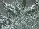 2005-02-28 Snow
