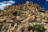 Desert Rock Garden.jpg