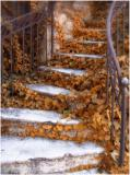 Autumn Steps