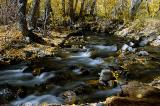 4820-Fall-Forest-2.jpg