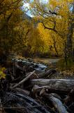 4812-Fall-Forest.jpg