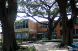 Under oaks at Holy Cross School