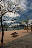 Sydney Harbour Bridge and jacaranda trees
