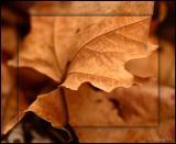 Crispy Leaves 04