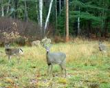 2004_1030_Five Deer