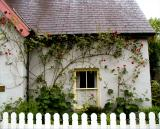 Rose-covered cottage County Clare, Ireland