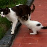 Kittens01.jpg