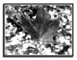 leaf003.jpg