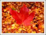 leaf004.jpg