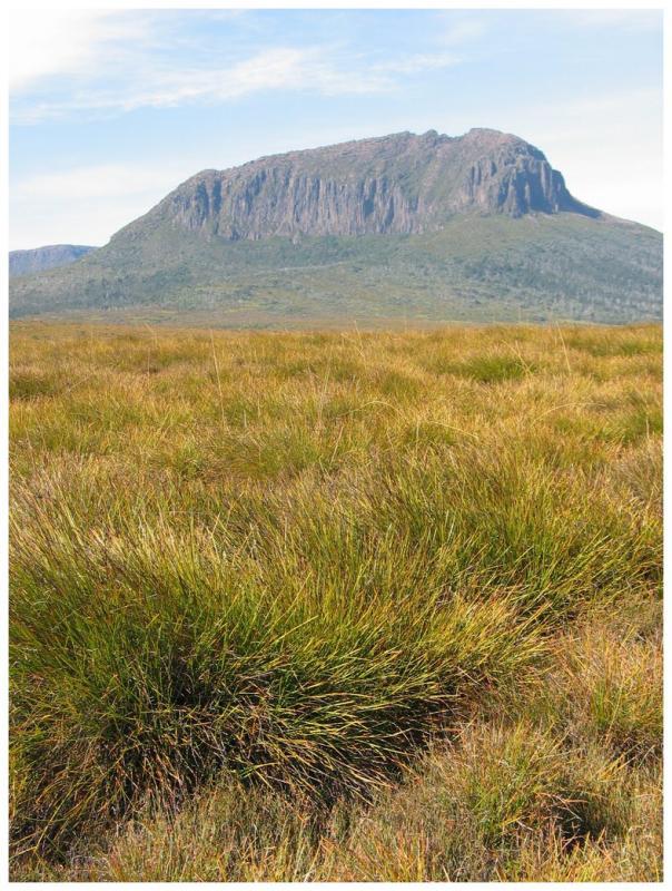 Mount Pelion West (3)