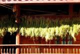 Harvest drying on balcony
