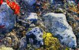 birch'moss