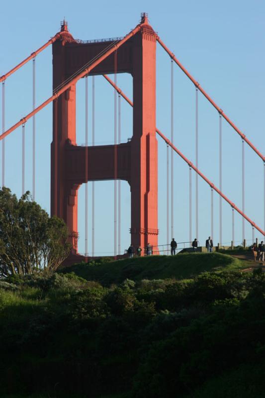 Bridge and ants