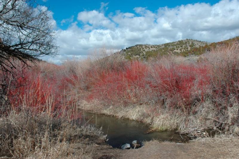 Cherry Springs Nature Area near Scout Mountain DSC_3862.jpg
