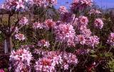 'Spring Sensation'