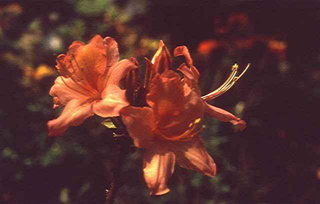 Spring Enchantment