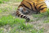 Eenie, Meenie, Mynie, Mo;  Catch a Tiger by the Tail...