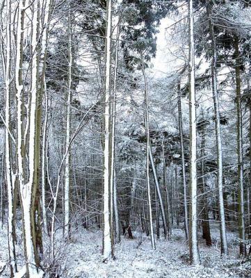 Matlask Woods