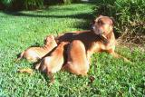 Suzzy and her Pups in the back yard - no need to worry about the Hawk here!