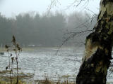 Gray winter weather