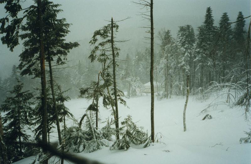 Phillips Brook sledding 98