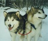 Broc and Tasha - Phillips Brook '98