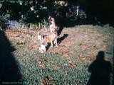 Hileah Fla. Queenie and her pups.